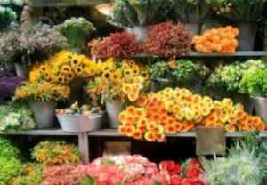 как открыть свой цветочный бизнес с нуля
