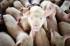 бизнес план свинофермы