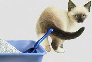 производство наполнителей для кошачьих туалетов