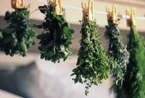 бизнес на выращивании трав